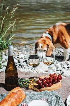 Hond wandelen in de buurt van wijnglazen en fles aan de rivierkust