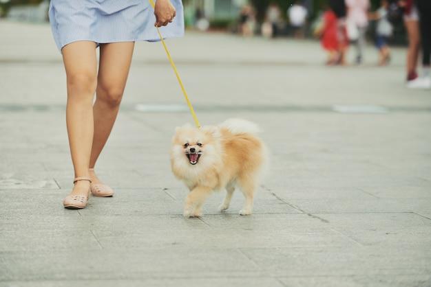 Hond wandelen in de stad