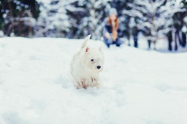 Hond witte terriër draait op een besneeuwd pad