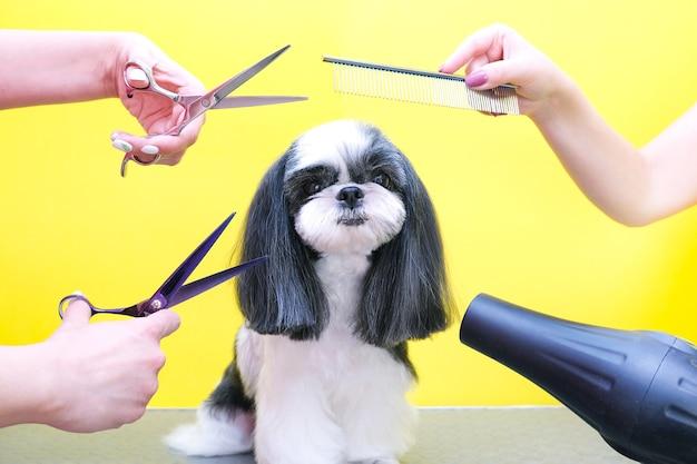 Hond wordt geknipt bij pet spa trimsalon. close-up van hond. de hond heeft een kapsel. kam het haar. roze achtergrond. trimsalon concept.