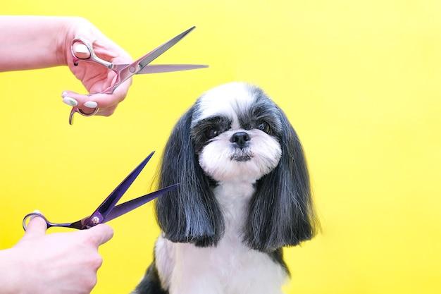 Hond wordt geknipt bij pet spa trimsalon. close-up van hond. de hond heeft een kapsel. kam het haar. roze achtergrond. trimsalon concept. Premium Foto