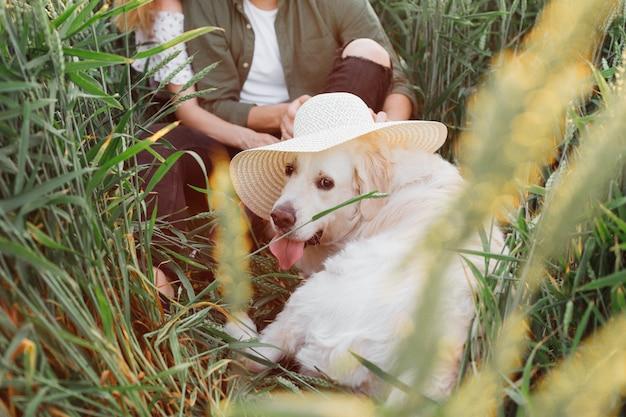Hond ziet er geweldig uit in grote witte hoed, op zomeravond door zijn eigenaren in het veld tussen het gras. liefde en tederheid. mooie momenten van het leven. rust en zorgeloosheid. natuurwandelingen.lifestyle.