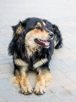 Hond zit op de stoep van stadsstraat, hond vertrouwt mensen