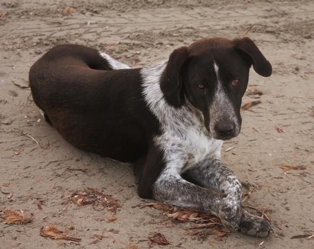 Hond zittend op het strand iets te wachten