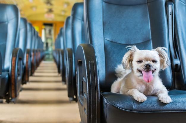 Hond zo schattig beige kleur gemengd ras op autostoel in een spoorlijn