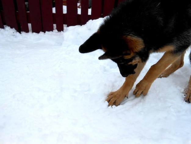 Hond zoekt spelen in de sneeuw