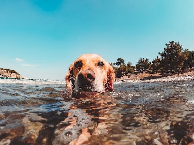 Hond zwemmen in de zee