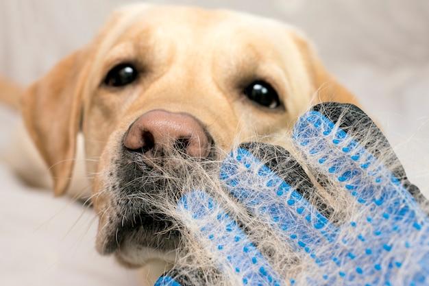 Honden afwerpen, dieren verzorgen, honden verzorgen. borstel met hondenhaar close-up.