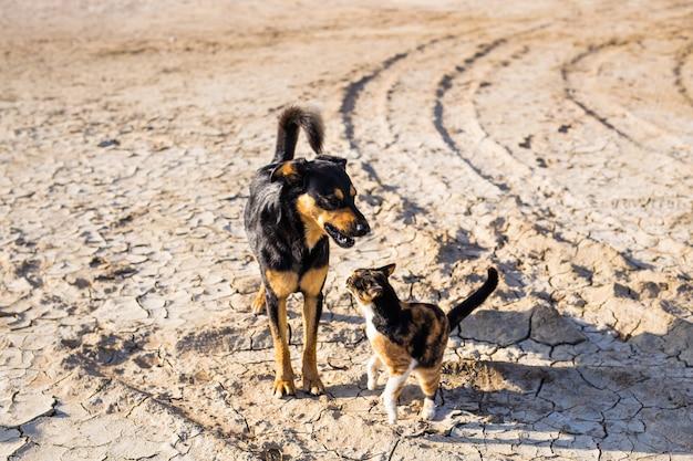 Honden en katten buiten spelen samen