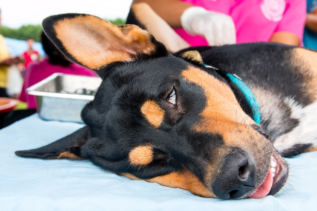 Honden en katten castreren tijdens wereld rabies dag