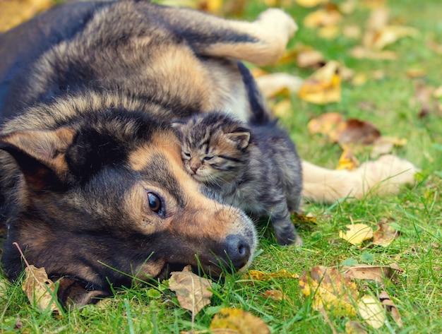 Honden en kleine kittens zijn beste vrienden die samen buiten spelen. liggend op het gras in de herfst