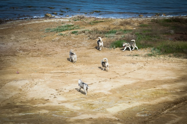 Honden lopen langs de oever van de rivier.