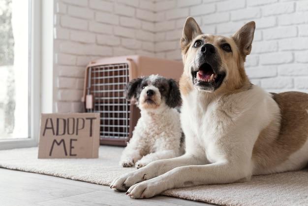 Honden met een lage hoek adopteren me banner