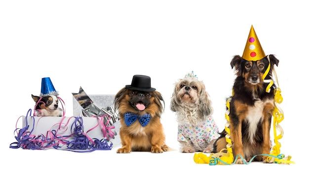 Honden met feestmutsen