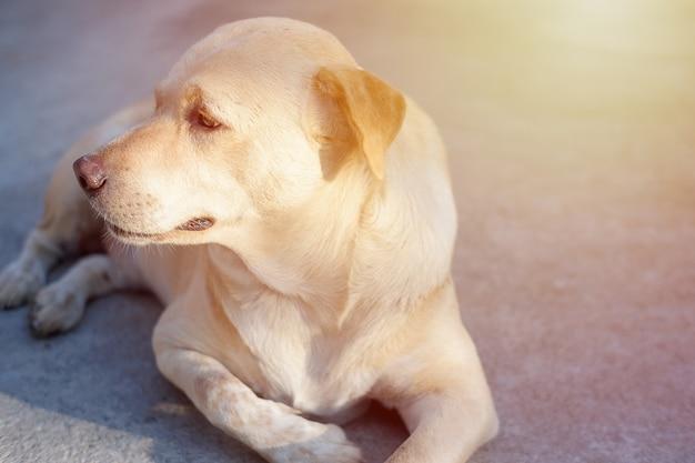 Honden met tropische depressie in thailand. zwart-wit toon.