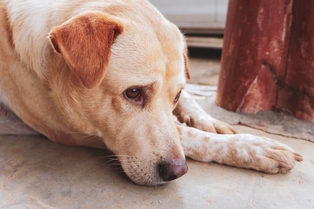 Honden met tropische depressie in thailand zwart-wit toon