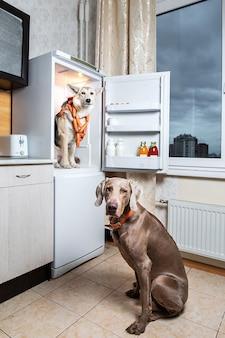 Honden stelen samen eten uit de koelkast in de keuken. het bordje op de worstjes melkachtig