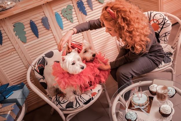 Honden versieren. bovenaanzicht van gekrulde roodharige vrouw met koperkleurig haar dat haar schattige honden verfraait