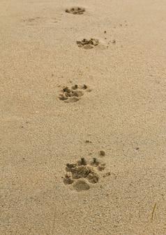 Honden voetafdrukken