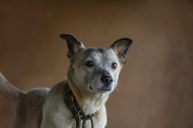 Hondenportret op gekleurd bruin