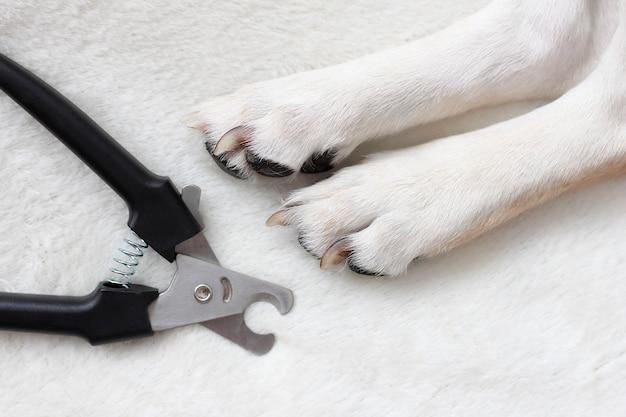 Hondenpoten klauwschaartrimmer voor het knippen van de klauwen van katten en honden guillotineklauwschaar zwart snijden van de klauwen van een hond Premium Foto