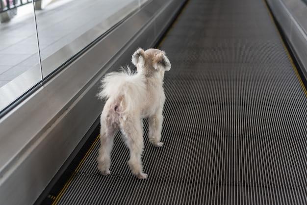 Hondenreis op travolator voor reis op het station