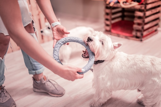 Hondenring geven. close-up van een vrouw die mooie sneakers en jeans draagt en een hondenring geeft om te spelen