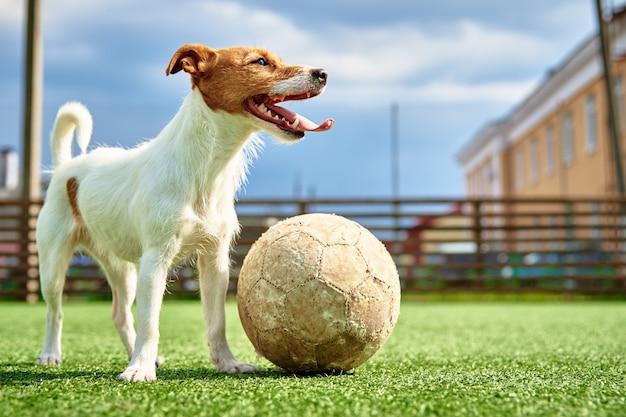 Hondenspel met voetbalbal op groen gras