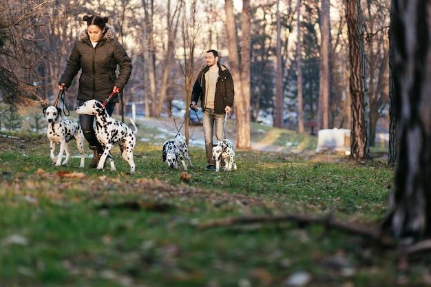 Hondenuitlaters met dalmatische honden genieten in het park.