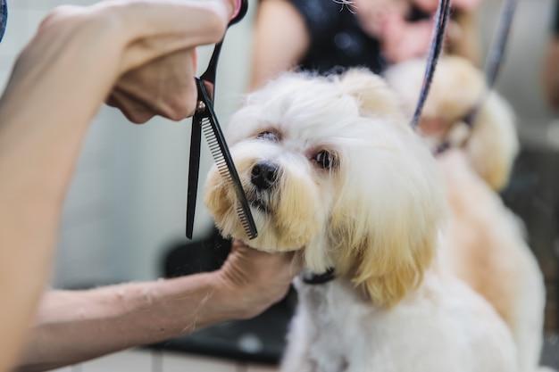 Hondenverzorging honden trimmen in de salon hoge kwaliteit foto