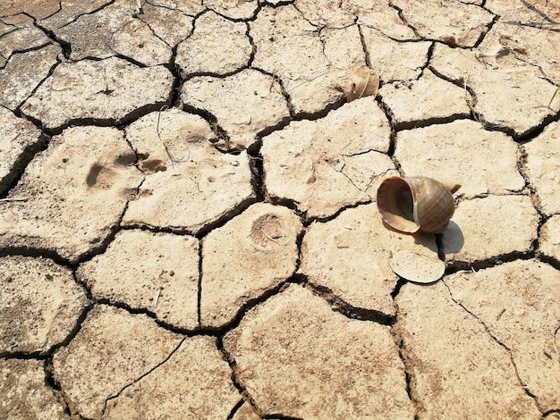 Hondenvoetafdruk en dode schelp op droge grond