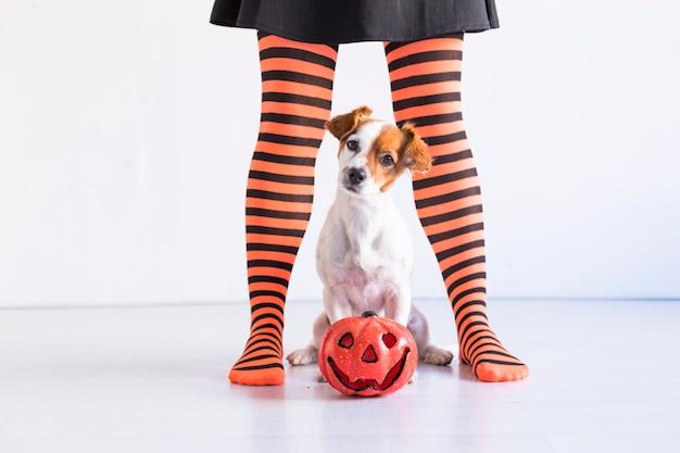 Hondenzitting op de vloer met daarnaast een pompoen en haar eigenaar. vrouw die zwarte en oranje legging draagt. halloween concept. lifestyle binnenshuis