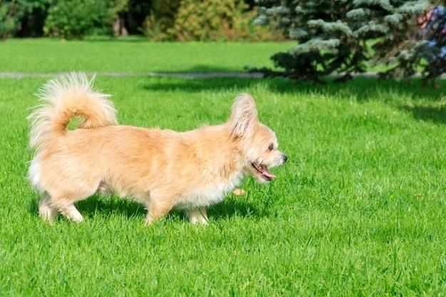 Hondje liggend op het gras