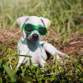 Hondvriend het leuke honds glimlachen