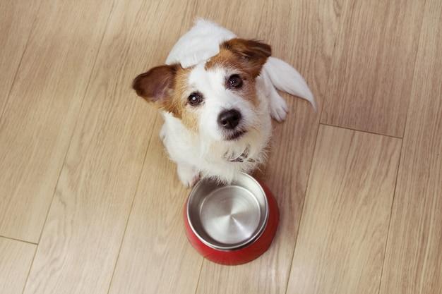 Hongerig hondenvoer met een rode lege kom. hoge kijkhoek.