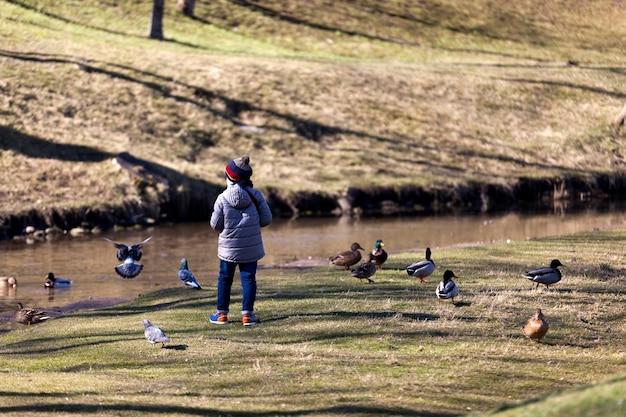 Hongerige duiven die in de herfst en winter in de stad wonen, wachten om door mensen te worden gevoed, vogelduiven die in de buurt van mensen in de stad wonen