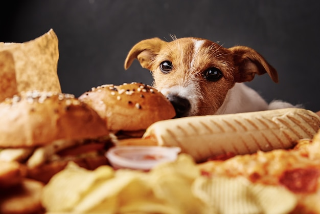 Hongerige hond die voedsel van tafel steelt