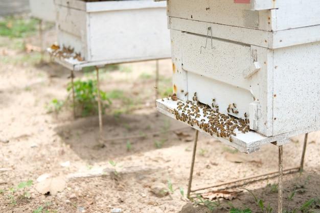 Honingbij bijenkorf huis close-up