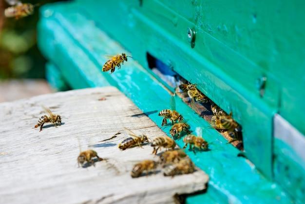 Honingbij vliegt naar een houten bijenkorf.