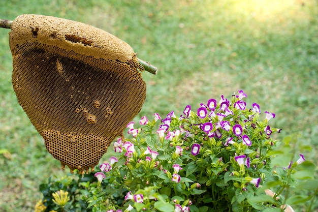 Honingbijbijenkorven bij de tuin
