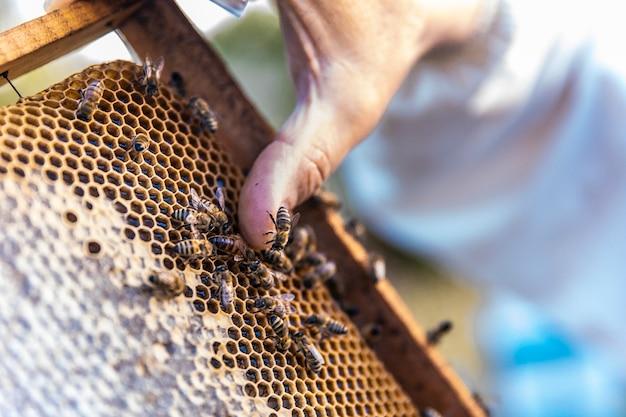 Honingbijen lopen op houten bijenkorven
