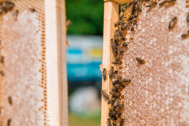 Honingbijen op een houten bijenkorf. hoge kwaliteit foto