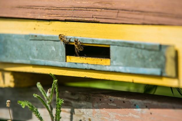 Honingbijen vliegen in en uit hun korf. bijenkorven in de bijenstal. bijen klaar voor honing. lente seizoen