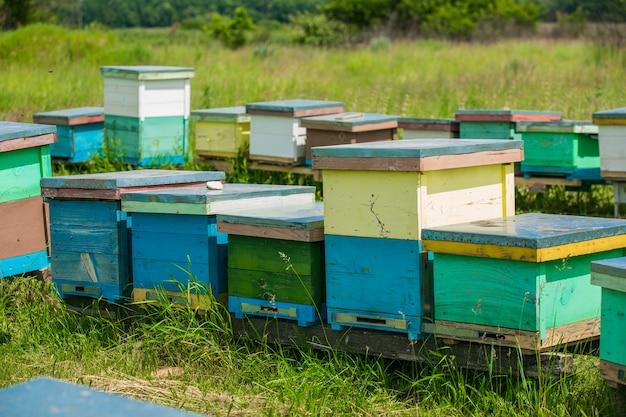 Honingbijen vliegen in en uit hun korf. bijenkorven in de bijenstal. bijen klaar voor honing.
