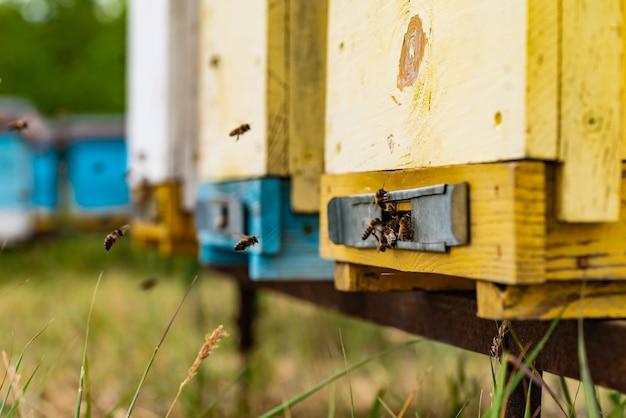 Honingbijen zwermen en vliegen rond hun bijenkorf.