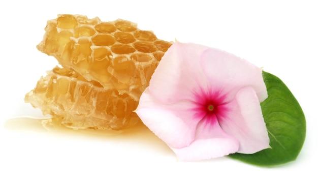 Honingkam met geneeskrachtige nayantara op witte achtergrond