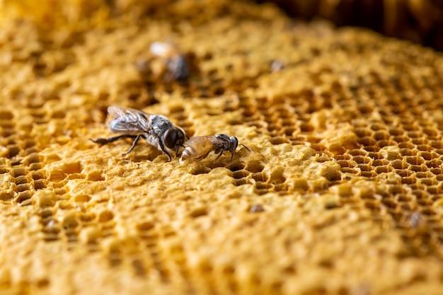 Honingraat met bij