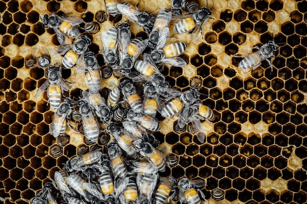 Honingraat met bijen achtergrond