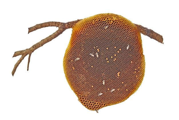 Honingraat met bijen geïsoleerd op whtieachtergrond