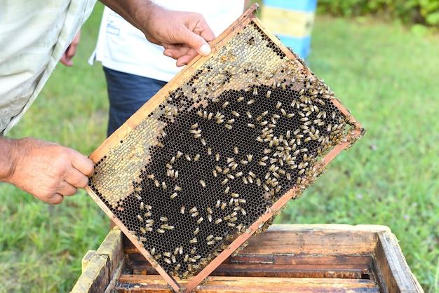 Honingraat met bijen in de hand